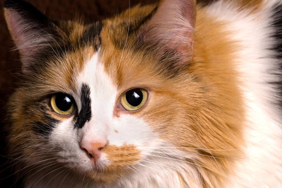 mơ mèo điềm báo gì