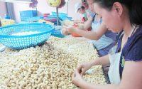 Mỹ giảm nhập khẩu điều của Việt Nam