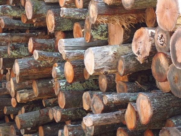 Mơ thấy gỗ là điềm báo lành hay dữ về tương lai?
